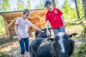 lapset silittävät lampaita